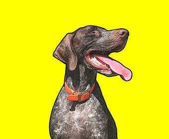 #1 for Photo to POP ART Dog Portrait by Ljaaay