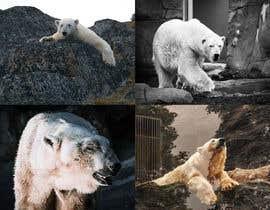 Nro 2 kilpailuun Draw some Polar Bears! käyttäjältä wujeanphilippe