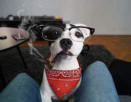 #25 para Need funny objects photoshopped on dogs photos de namunamu
