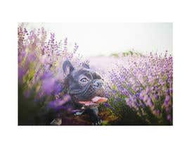 #107 for Enhance Dog Photos; Beautifully, Creatively! by manuelameurer