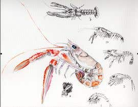 #6 para Illustrate - Prawn Life Cycle por barbarabacci