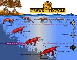 #20 para Illustrate - Prawn Life Cycle por ericgran