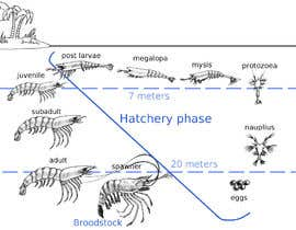 #9 para Illustrate - Prawn Life Cycle por MasterHappyness