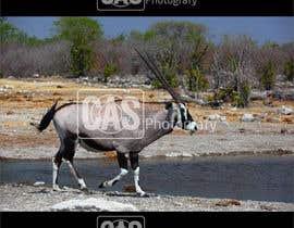 #12 for logo de CAS o CAS photofrafy en marca de agua para fotos by anwarbappy