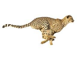 #15 for design real cheetah like this picture by abwahid9360