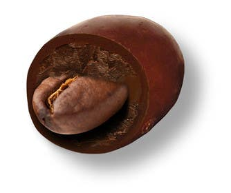 #4 for HD Image of coffee bean coated in chocolate by Batmanci