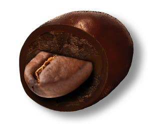 #6 for HD Image of coffee bean coated in chocolate by Batmanci