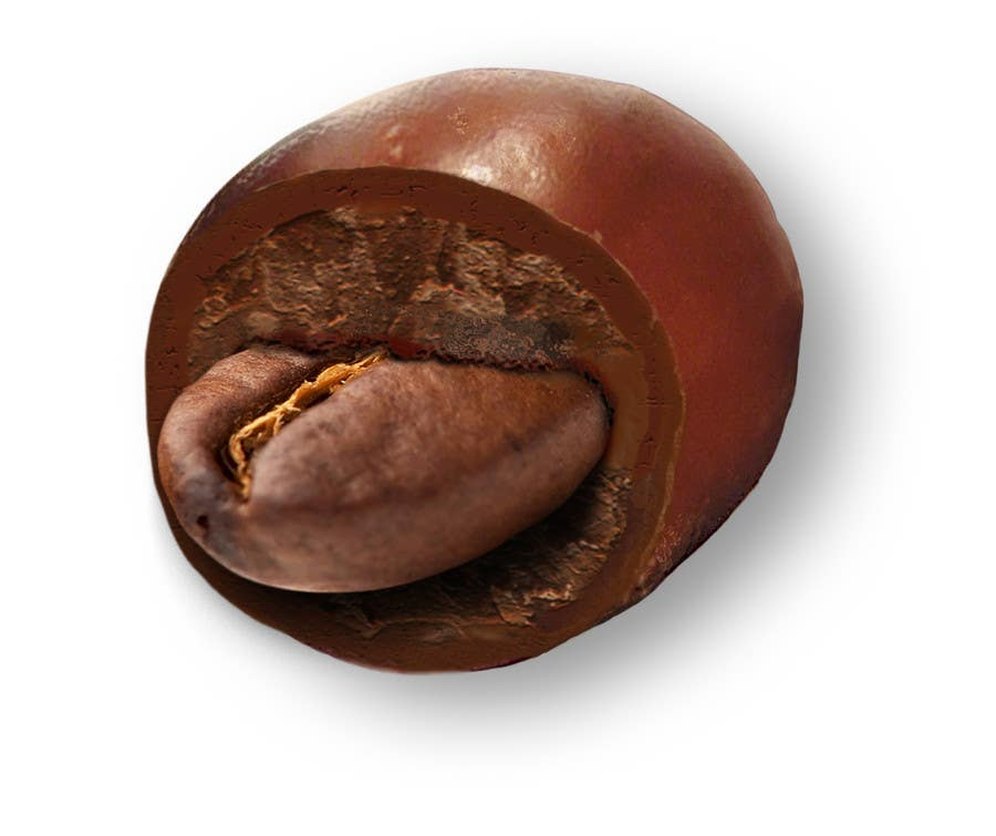 #12 for HD Image of coffee bean coated in chocolate by Batmanci