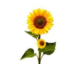#4 for FLOWER ILLUSTRATIONS by mdmokibur