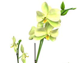 #13 untuk Photorealistic 3D model of different plants including PBR Maps (Albedo, Normal, Roughness, Specular) oleh kvinke