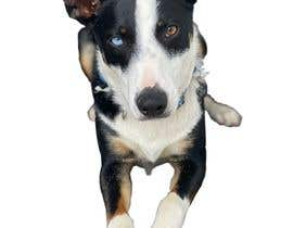 Nro 156 kilpailuun make my dog image background transparent so I can print them on t-shirts, socks, shorts, etc. käyttäjältä premnathskills