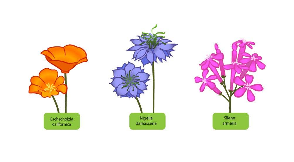 Contest Entry #                                        67                                      for                                         Vector Flower Icons