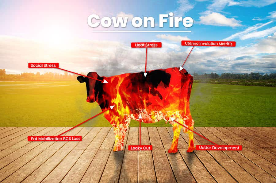 Contest Entry #                                        19                                      for                                         Make me a Cow Fire Graphic