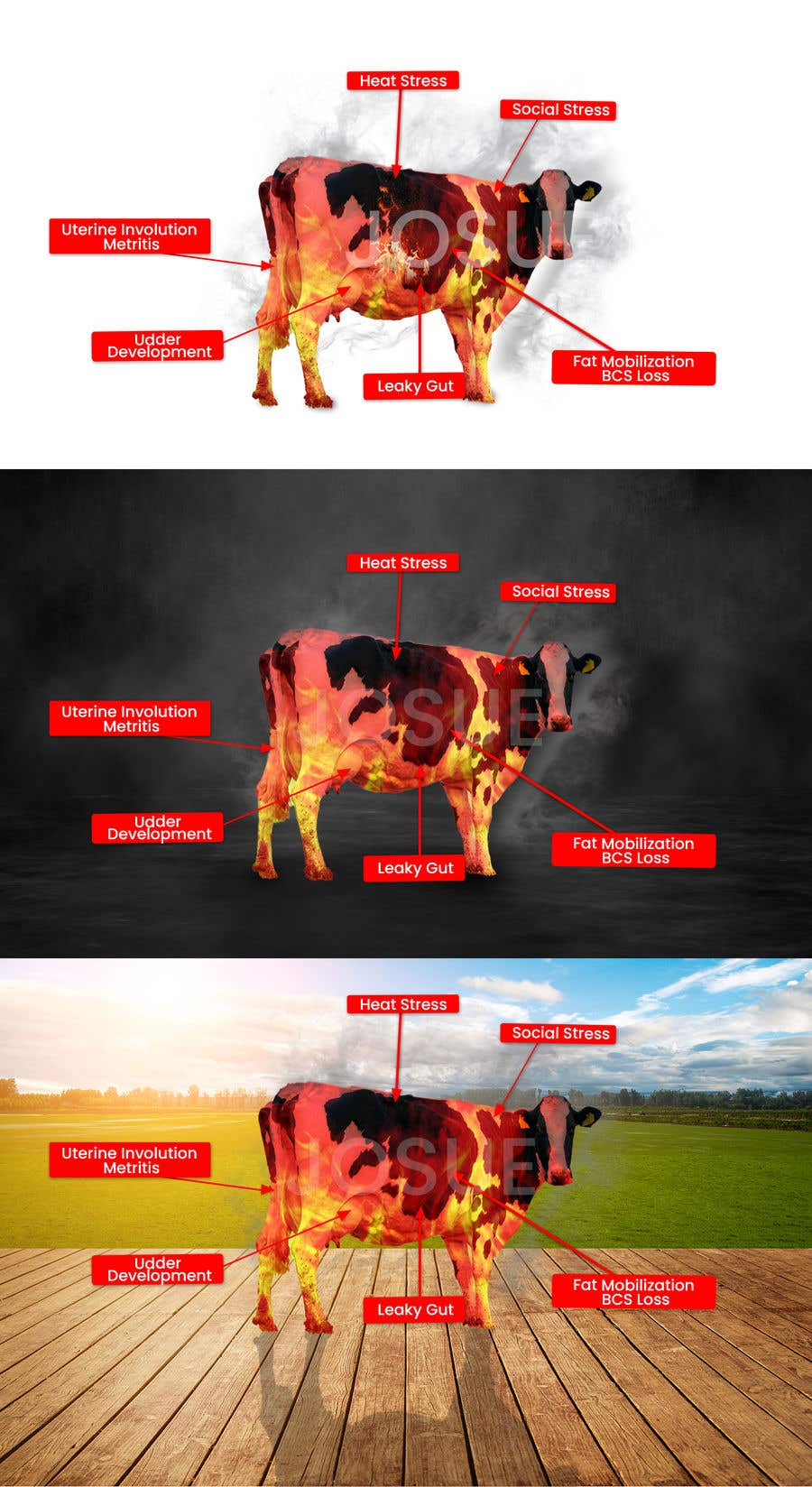 Contest Entry #                                        34                                      for                                         Make me a Cow Fire Graphic