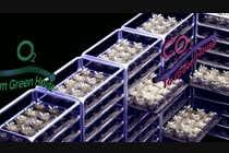 Animation Entri Peraduan #9 for Mushroom Growth System