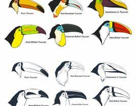 #64 untuk Sketches of Toucans oleh iwanbonano