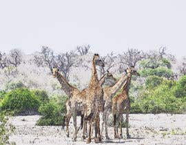 #4 for Create an impressionist painting of wildlife photo by Lauravqs