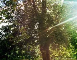 #3 untuk Big Tree Photo edit oleh love2joy