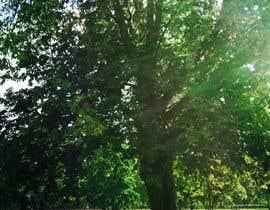 suelentu tarafından Big Tree Photo edit için no 6