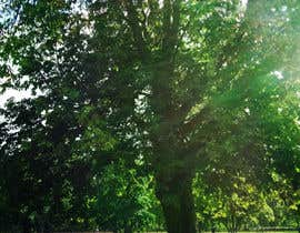 #6 untuk Big Tree Photo edit oleh suelentu
