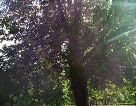 #76 untuk Big Tree Photo edit oleh lippipress