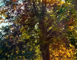 #22 untuk Big Tree Photo edit oleh sreedutt