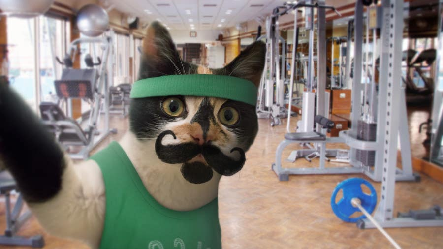 Contest Entry #                                        66                                      for                                         Freelancer.com #MOVEmber Challenge - Give Your Pet a Makeover (Photoshop Design Contest)