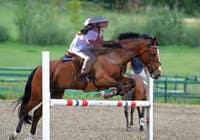 Bài tham dự #37 về Photoshop cho cuộc thi Horse jump photoshop