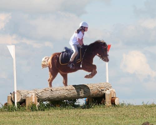 Bài tham dự cuộc thi #                                        7                                      cho                                         Horse jump photoshop