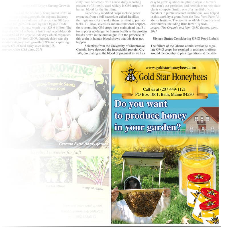 Contest Entry #                                        27                                      for                                         Advertisement Design for Gold Star Honeybees