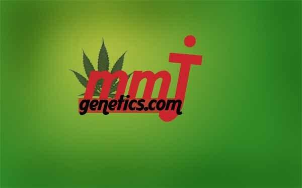 Inscrição nº                                         26                                      do Concurso para                                         Graphic Design Logo for MMJ Genetics and mmjgenetics.com