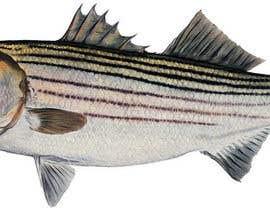 evamilanka tarafından Create fish art from photographs için no 15
