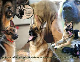 #10 para Design a Banner for Southeast German Shepherd Rescue Website por bogdan0507