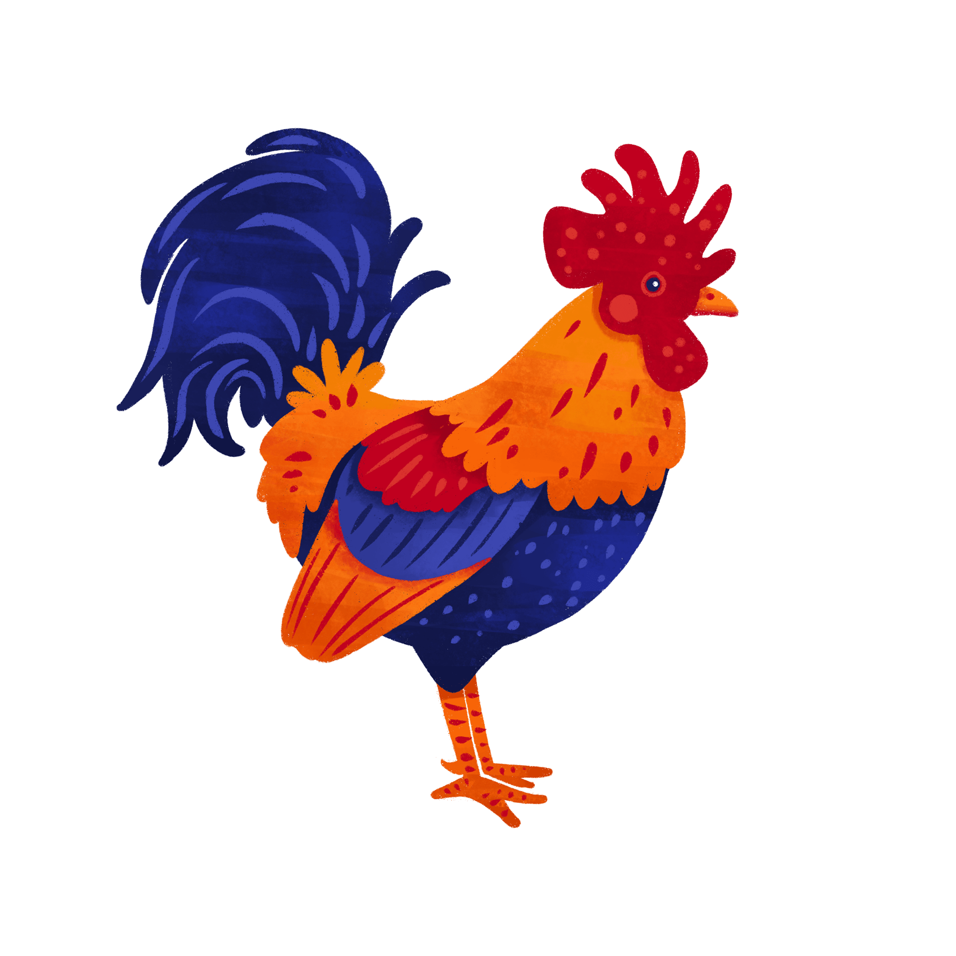 Rooster spot illustration done with procreate.