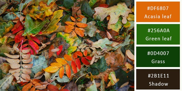 color combination - fallen leaves