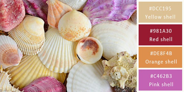 bright color combination - shells