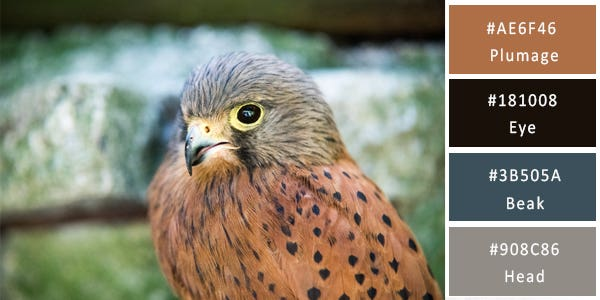 neutral color combination - bird