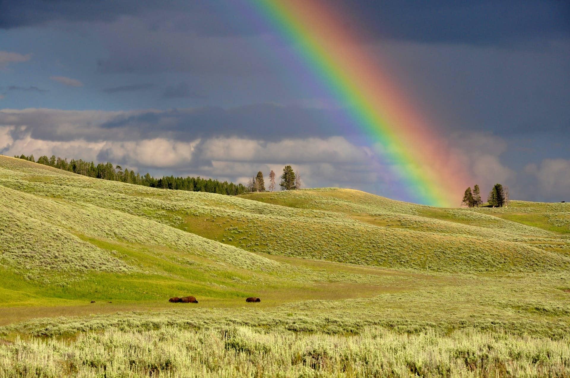 rainbow-over-field