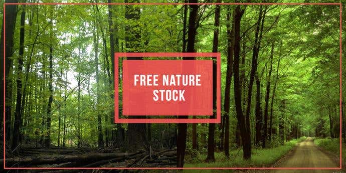 Two free, awesome pictures taken from Free Nature Stock