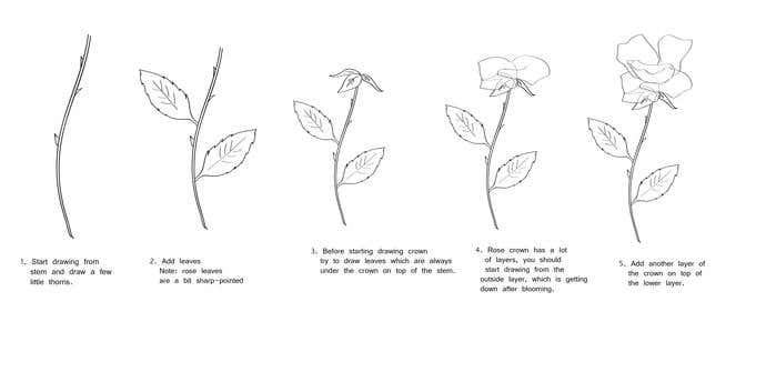 How To Draw A Rose In 7 Steps  - Image 1