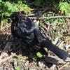 pratibha4698's Profile Picture