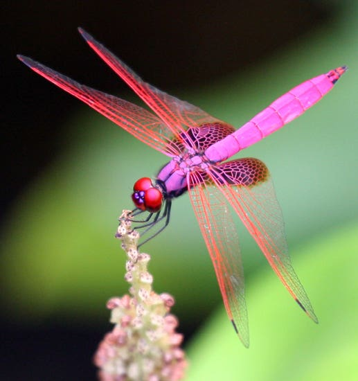 Profile image of dragonfly1